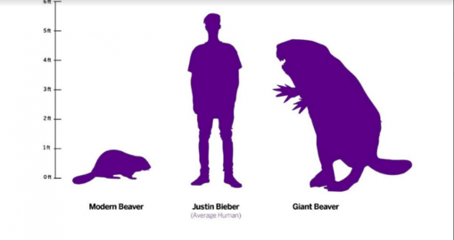 Comparación de un castor moderno, un humano y un castor gigante del tamaño de un oso de hace 10.000 años