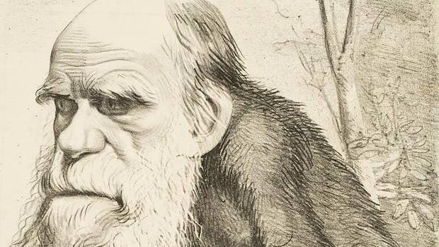 Darwin fue el gran pionero de la primatología. En la imagen, caricatura publicada por la revista «Hornet» en 1871