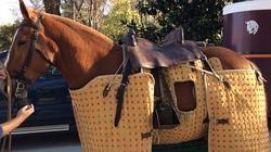 El caballo de picar