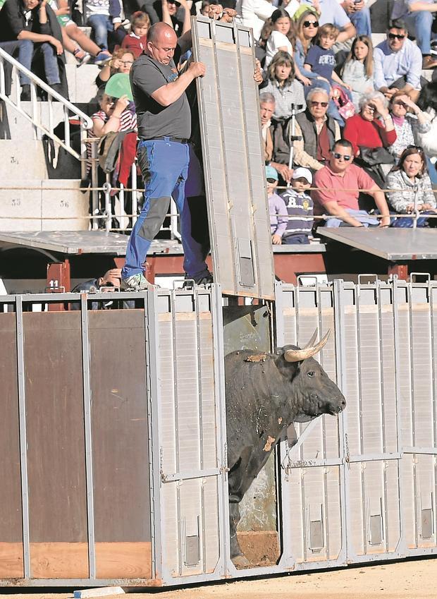 Desenajaule de uno de los toros