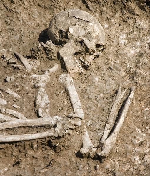 Uno de los esqueletos hallados. Muchos tenían huellas de manipulación experimental