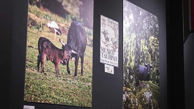 Exposición en Las Ventas