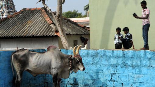 Unos niños observan «el toro en los corrales»