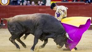López Simón indulta a «Pasmoso», el último toro de la Feria de Fallas