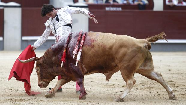 Juan del Álamo, en un sentido muletazo al tercer toro de Alcurrucén