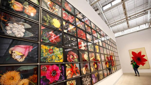 Hasta 350 obras en la colectiva inaugural de B. Gens, como el centenar largo de «flores» de Araki (en la imagen)