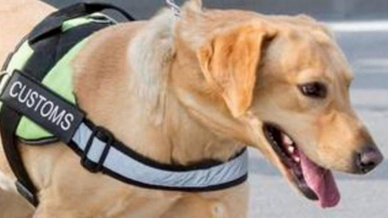 Entrenan a perros para detectar el patrimonio cultural robado en Estados Unidos