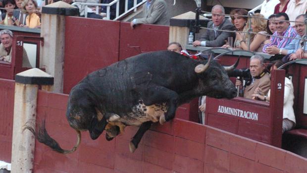 Un toro salta al callejón de Las Ventas (imagen de archivo)
