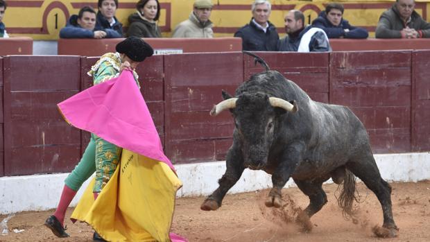 Antonio Ferrera, en el recibo al toro de Victorino