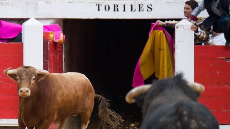 A Morante le salen dos toros a la vez en Brihuega