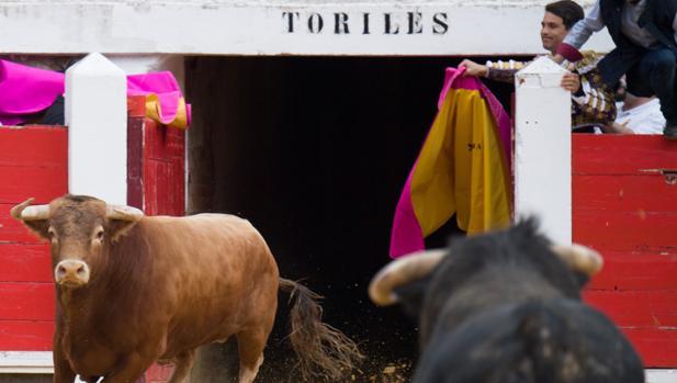 Dos toros en el ruedo de Brihuega