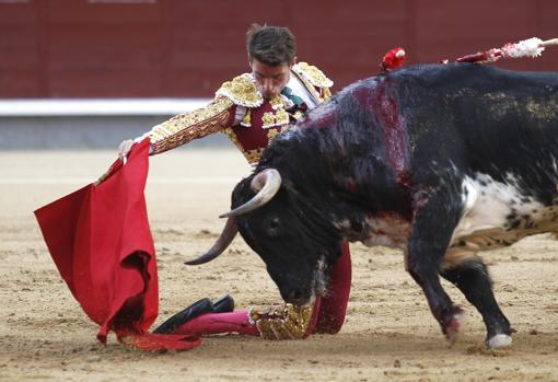 Alfonso Cadaval inicia de rodillas la faena al novillo de su presentación en Madrid