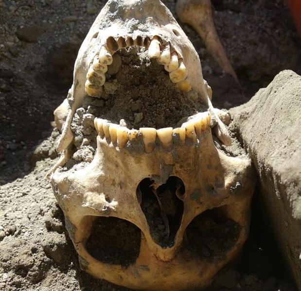 El cráneo del «fugitivo»