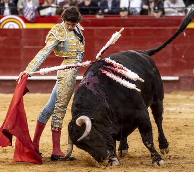 «Horroroso» embiste con pprofundidad en la muleta de Sebastián Castella