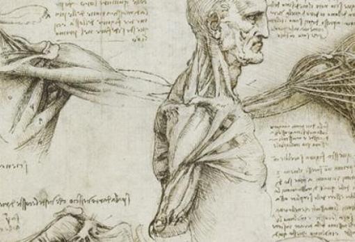 Uno de los dibujos anatómicos de Da Vinci
