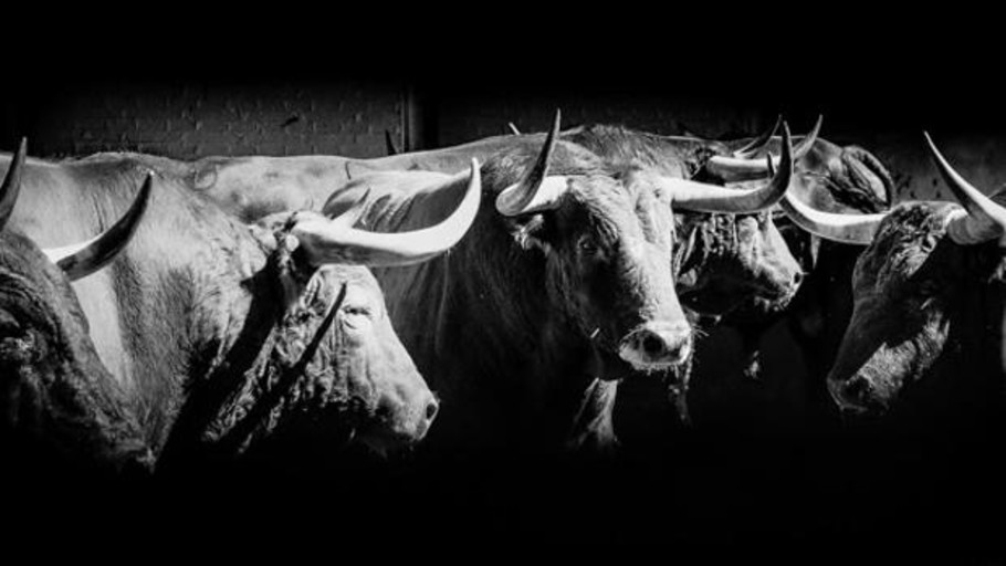 Directo: El Juli, Paco Ureña y David de Miranda, toro a toro en San Isidro