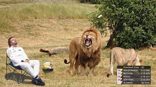 Durmiendo entre leones