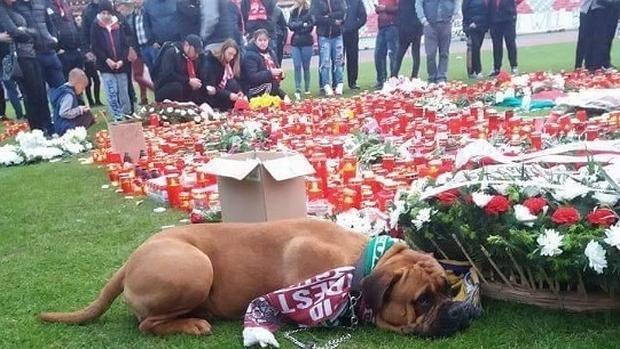 El perro, apenado, junto a un centro de flores depositado sobre el césped del estadio
