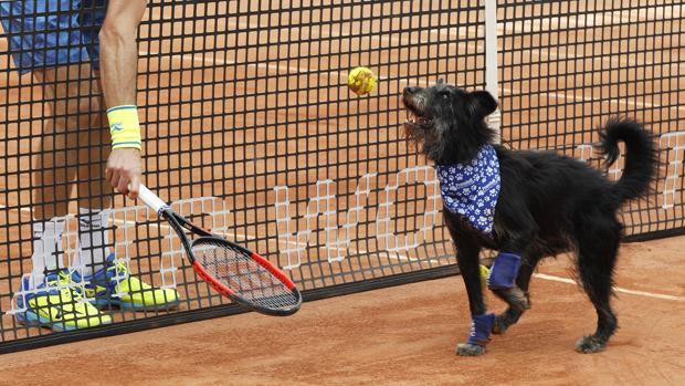 El Abierto de Brasil utiliza a perros abandonados como recogepelotas