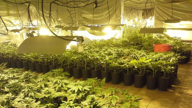 El cannabis se está convirtiendo en uno de los activos más prometedores en la capital mundial de las finanzas