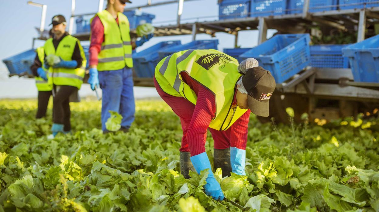 Florette cerrará 2018 con una facturación récord de 190 millones de euros