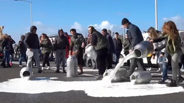 Productores vuelcan cántaros de leche a la carretera como protesta