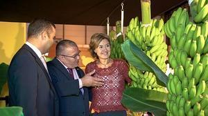 Plátano de Canarias se muestra en Fruit Attraction