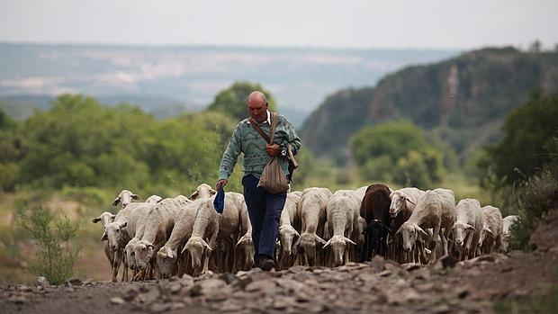 Ovejas y cabras contra el fuego