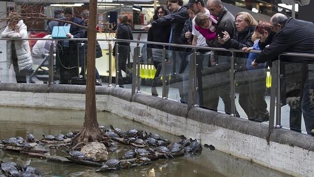 Alarma por las tortugas caníbales en el jardín tropical de Atocha
