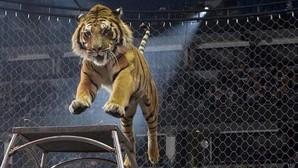 San Sebastián de los Reyes se declara «ciudad libre de circos con animales»