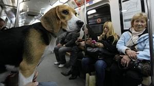 Los perros podrán viajar en el Metro de Madrid con correa y bozal y en el último tren