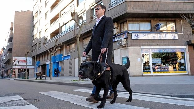 Image result for perro guia