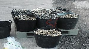 Decomisados más de 710 kilos de pescado y marisco ilegal en la costa