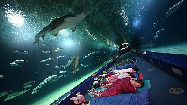 El oceanogr fic de valencia ofrece a los ni os dormir una for Oceanografic valencia precio 2016