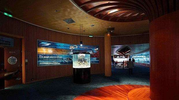 Nemo llega al oceanogr fic de valencia for Promociones oceanografic