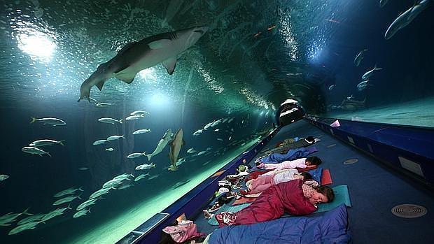Aventura bajo el mar as es la escuela de verano del for Hotel oceanografic ninos