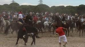 Castilla y León impide por decreto la muerte del Toro de la Vega