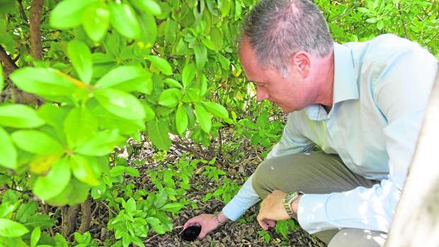 Colocación de trampas para detectar el acceso de mosquitos con capacidad para trasmitir el Zika