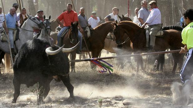 Hemeroteca: Un centenar de grupos taurinos se vuelca con el Toro de la Vega | Autor del artículo: Finanzas.com