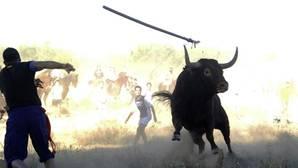 La Junta deniega al Ayuntamiento de Tordesillas celebrar el Toro de la Vega