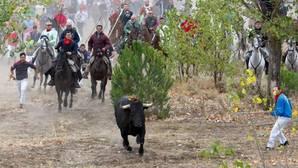Tordesillas recurrirá al TC la ley autonómica que impide la muerte del Toro de la Vega
