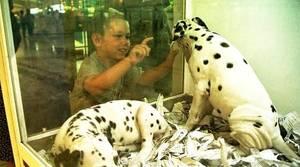 La Asamblea de Madrid prohibirá la exhibición y venta directa de perros y gatos en tiendas