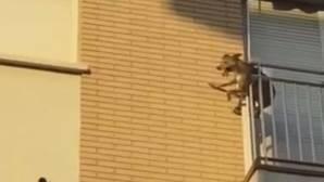 Detienen a una mujer por matar a su perro al lanzarlo desde un séptimo piso en Valencia