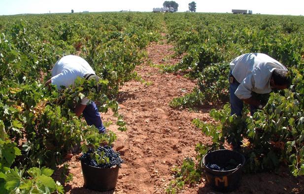 Imagen de archivo de la vendimia en una bodega de Castilla-La Mancha
