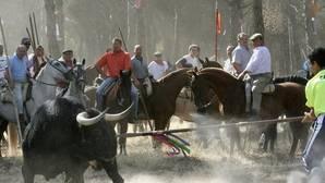El Consultivo avala el decreto que prohíbe la muerte del Toro de la Vega
