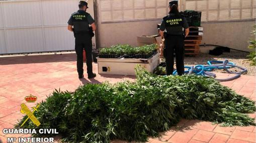 Algunas plantas intervenidas, en la entrada del chalé.