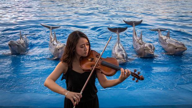 Los delfines bailan al son de la m sica en las nuevas for Precio oceanografic valencia 2016