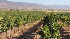 Castilla-La Mancha es la región con la mayor superficie de viñedo del mundo