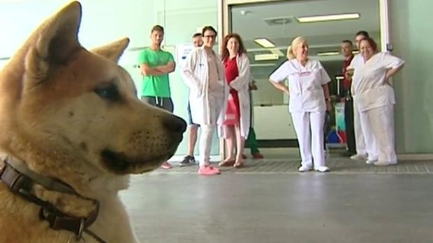 perra-hospital