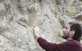 Encuentran calcada en una roca de Barcelona la piel de uno de los últimos dinosaurios del planeta